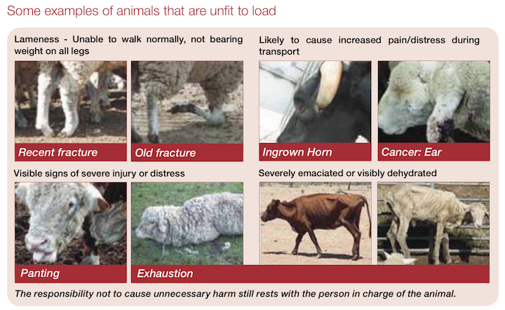 animals unfit to load