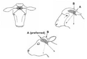 cattle humane destruction
