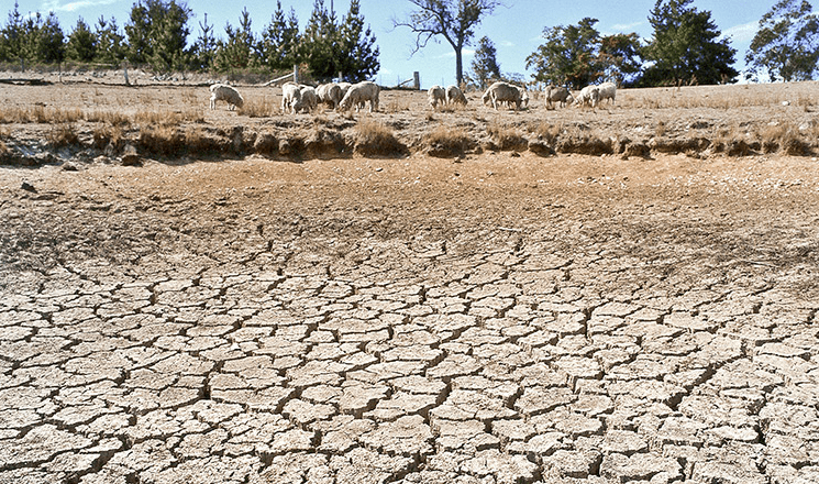 drought-assistance