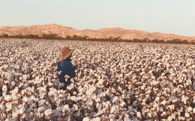 cottonForKeepPlains