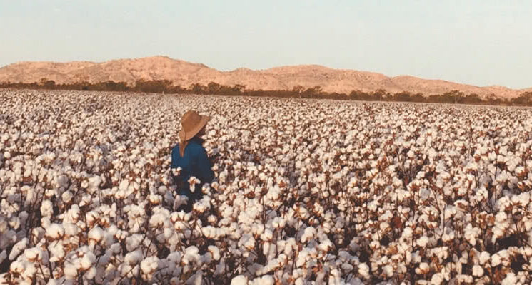 cottonForKeepPlains