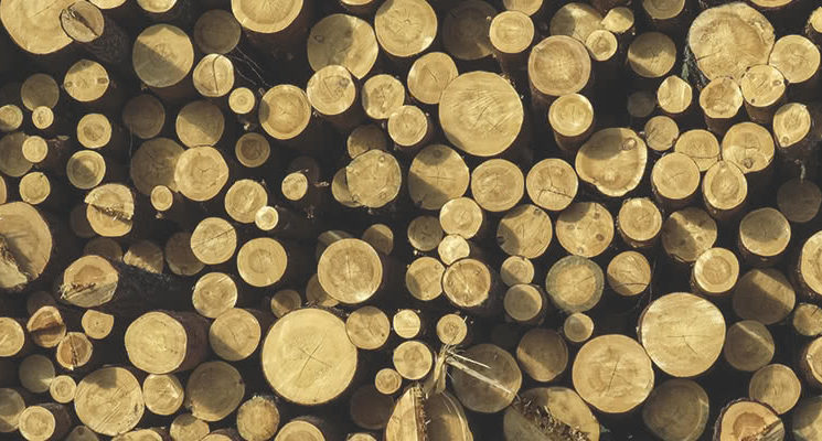 timber-industry-11