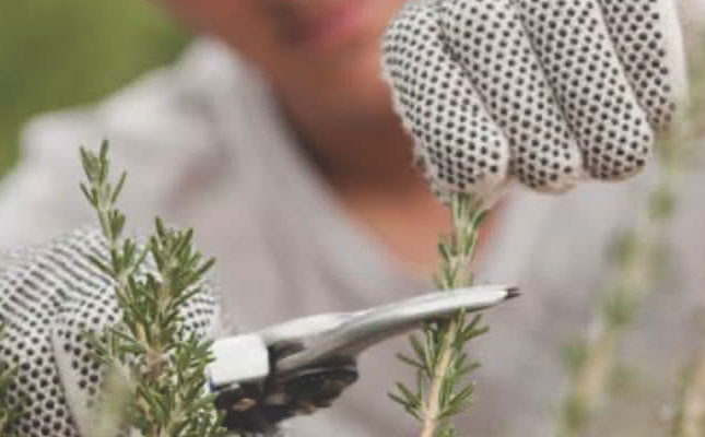 Bendigo-horticulture-22